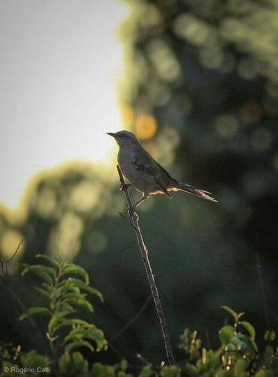 Nature Vibes Bird One Animal Animals In The Wild Perching Animal Themes Animal Wildlife Focus On Foreground Nature No People Day Outdoors Low Angle View Full Length Close-up Tree Beauty In Nature