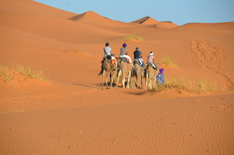 Rear view of people riding camel on sand