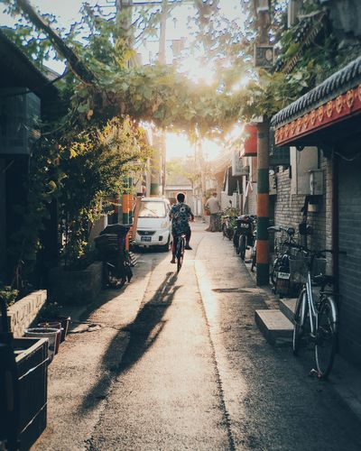 Architecture Bicycle Building Exterior Built Structure City Day Full Length Land Vehicle Men Mode Of Transport Outdoors People Real People Sunlight Transportation Tree Two People