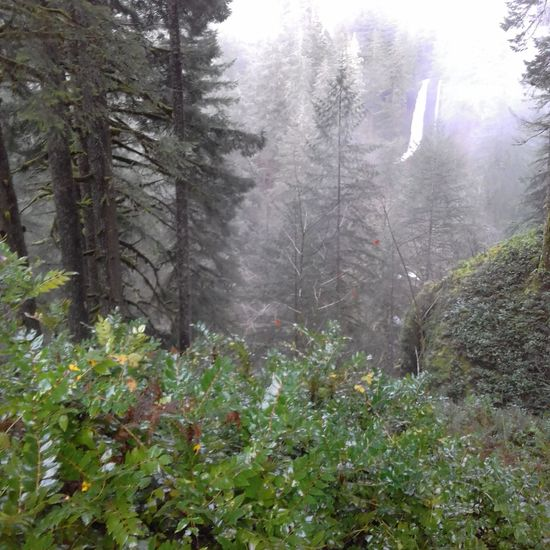 Growth Forest Beauty In Nature Fog No People Nature Scenics