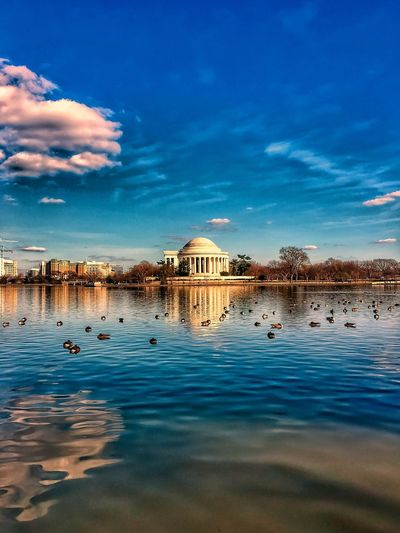 Jefferson Memorial reflected onto a pond surrounded by geese in winter. America USA Patriotism Reflecting Reflection Water Pond Seagulls Birds Avian Flock Winter Cold Bare Trees Geese Washington, D. C. Jefferson Memorial Water Sky Reflection Cloud - Sky Architecture Built Structure Dome Outdoors Travel Destinations Blue Building Exterior Nature Colour Your Horizn