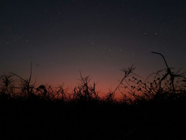 Sky in sunset Star - Space Sky Astronomy Night Galaxy Beauty In Nature Star Field Silhouette Nature Sunset Landscape No People Outdoors Scenics Nightphotography Tail Grass Silhouette Beauty In Nature Milky Way Low Angle View First Eyeem Photo Space Nature Beach Galaxy