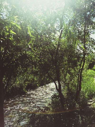 [ Cheonggye-cheon (Stream) ] 청계천 ( Cheonggye ) 걷기 ☀️⛅ // Emotional Photography , Taking Photos // Trees , Sunshine , Stream // Have A Good Day 😃