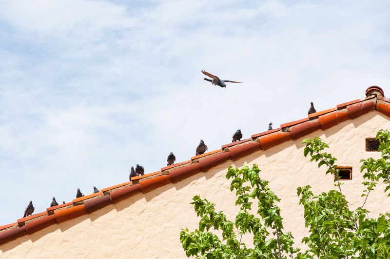 Birds on a roof Animal Themes Architecture Bird Building Exterior Day Low Angle View Nature No People Outdoors Pidgeons Sky