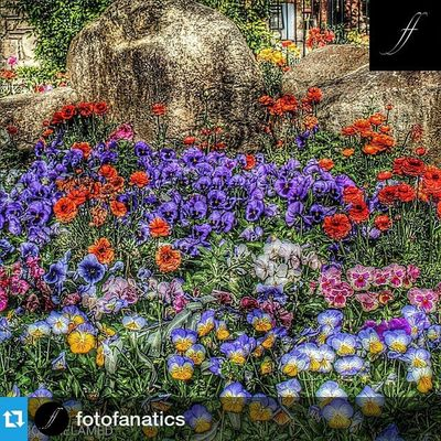 Thank you very much @sabimller and my friends @fotofanatics for featuring my work. It's a true honor and pleasure to be a part of your amazing gallery. If you want a chance at being featured be sure to follow @FOTOFANATICS and tag FotoFanatics Repost @fotofanatics ・・・ FotoFanatics Featured Artist 🌟🌟🌟🌟🌟🌟🌟🌟🌟🌟🌟🌟 @bobmelamed 🌟🌟🌟🌟🌟🌟🌟🌟🌟🌟🌟🌟 CONGRATULATIONS!🎊 Please take a moment to check out his/her fantastic gallery! **************************** Photo chosen by 👉 @sabimller **************************** Follow @fotofanatics and tag your photos FotoFanatics for a chance to be featured! 🌟🌟🌟🌟🌟🌟🌟🌟🌟🌟🌟🌟 Please check out and follow the other members of the FotoFanatics Family! @animal_fanatics @bnw_fanatics @fotofanatics_hdr @fotofanatics_macro_ @fotofanatics_nature_ @fotofanatics_architecture @fotofanatics_profile_ @fotofanatics_sky_ Member of hubdirectory.