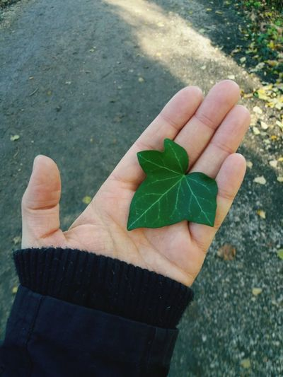 Flower In Hand Hände Art Heart ❤ Hold Human Hand Human Body Part Day One Person Nature Outdoors