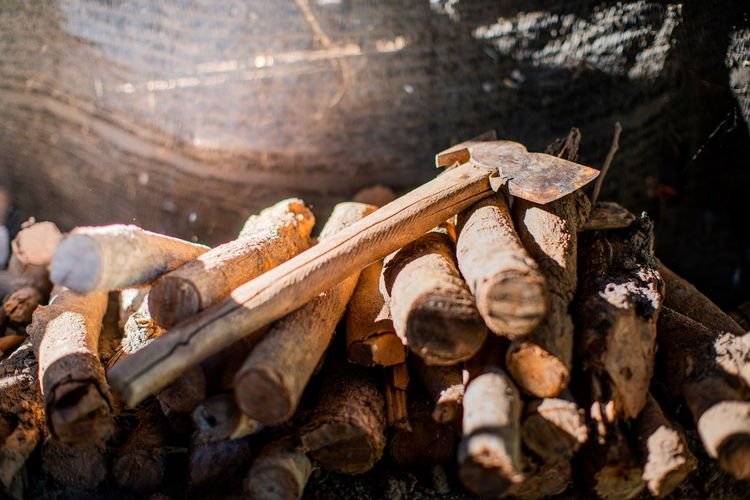 Close-up of wooden logs in forest