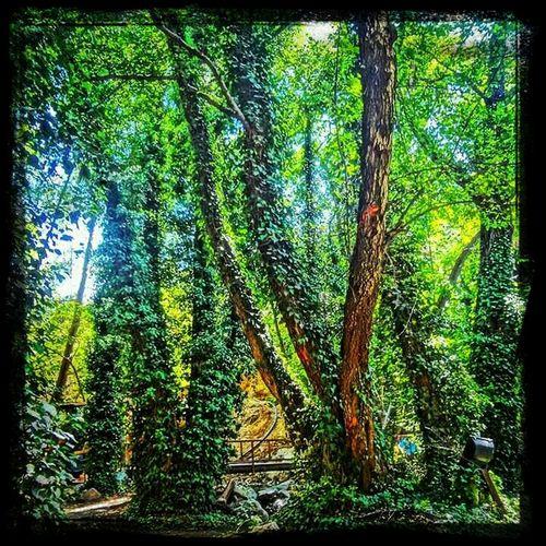 Nature Taking Photos Trees
