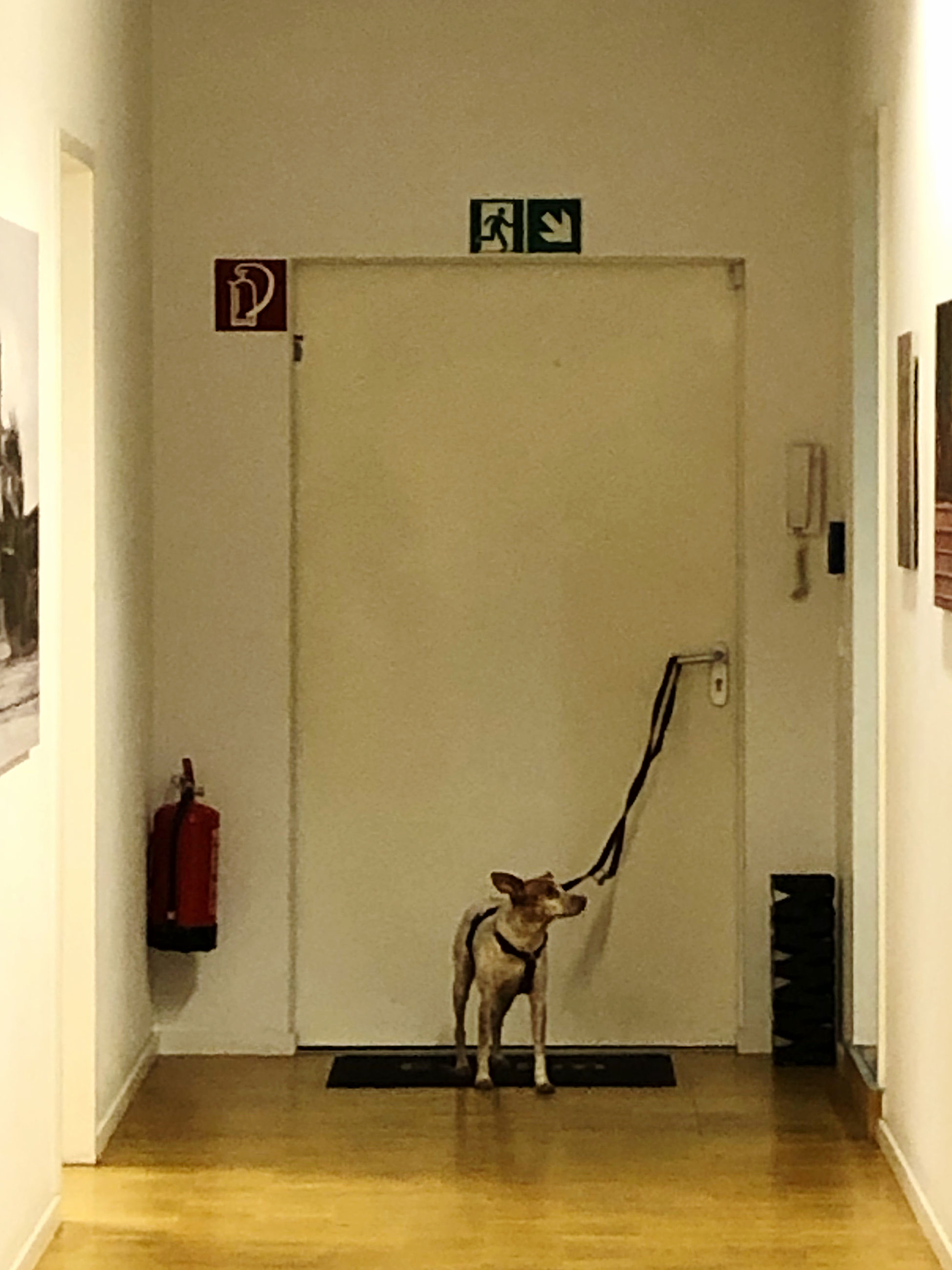 mammal, indoors, no people, one animal, representation, sculpture, entrance, domestic animals, art and craft, door, communication, domestic, human representation, wall - building feature, statue, architecture