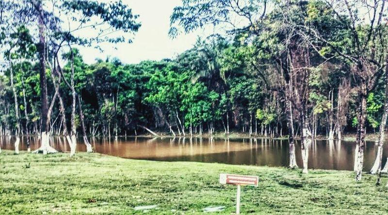 Rio Negro e Solimões fake. Amazonia Acre UFAC Relaxing Lago