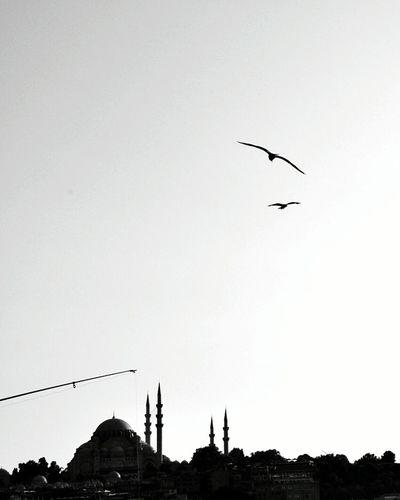 İstanbul'u anlatır fotoğraftaki üç şey Turkey Turkey💕 Mosque Mosque Architecture Birds Bird Historic Historical Building EyeEm Nature Lover EyeEm Gallery EyeEm Selects EyeEm Eyeemphotography Photo Photography Photograph Turkey Istanbul Istanbul Turkey Istanbul City Muslim Fisher Muslim Culture