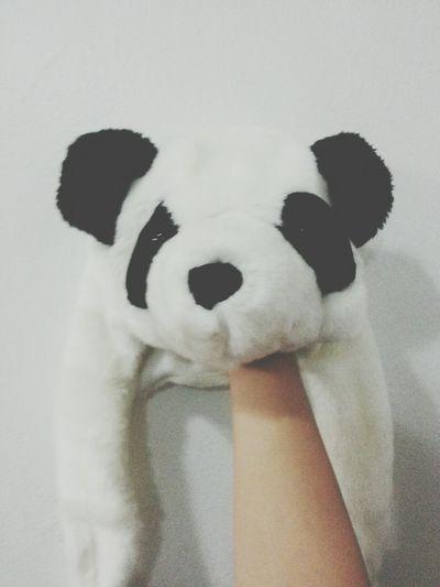 Sup panda ?