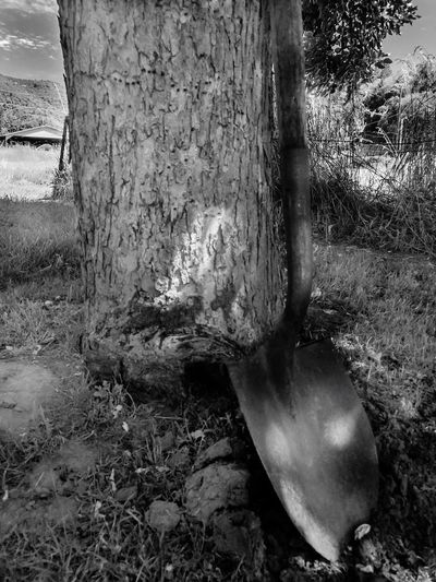 Black and white garden shovel leaning against tree in rural backyard. Tree Trunk Tree No People Day Outdoors Growth Close-up Nature Shovel Outside Outdoor Tool Garden Gardening Yard Lifestyles Leaning Backyard Breaktime Field Rural Scene Countryside