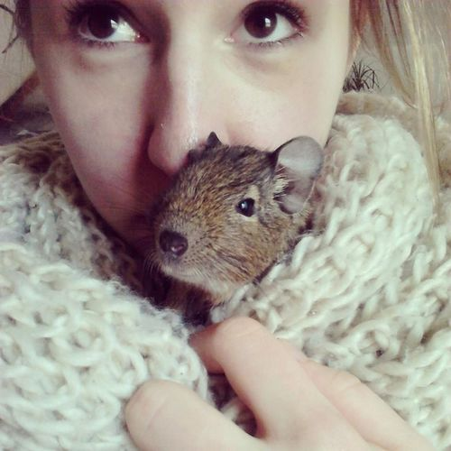 Degu Blonde Happy BORED!