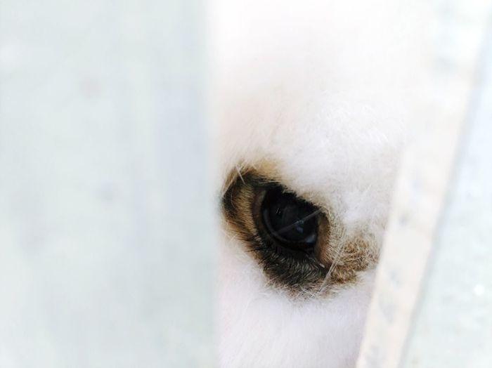 Cropped Eye Of Dog