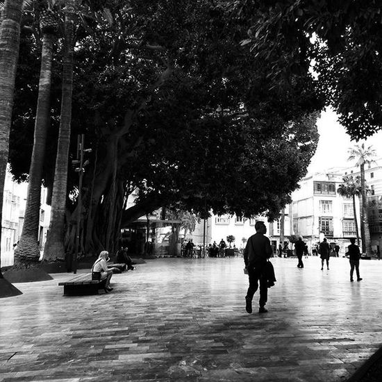 Waiting Blackandwhite Blackandwhitephotography Streetphotography Streetphoto Monochrome Mono Bnw Bnw_maniac Bnw_life Silhouettes Treeshunter Trees