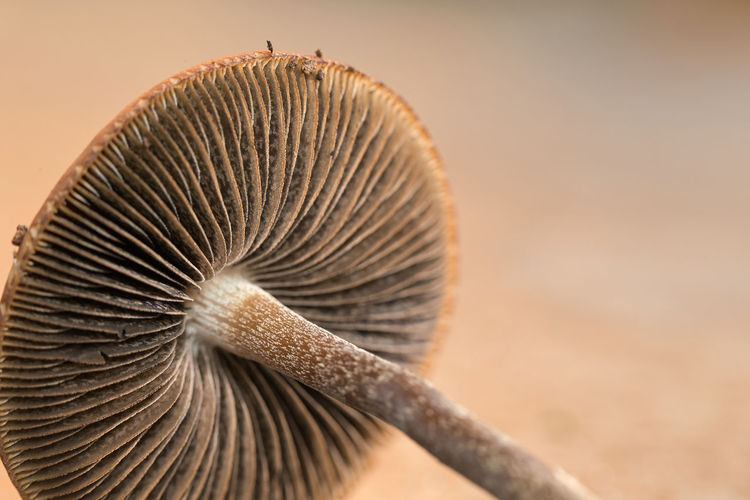 Close-up of a mushroom