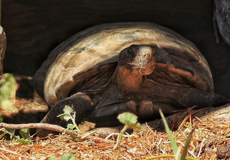 Turtle Rex The Turtle Ogden Nature Center