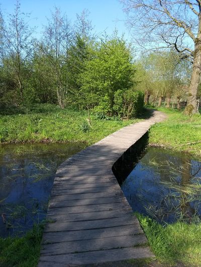 Bridge Water Tree Shadow Road Grass Sky Puddle Pathway The Way Forward Walkway Woods Standing Water Empty Road