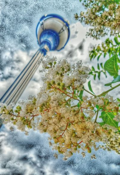 Fun Edit Flowers :) EyeEm Nature Lover EyeEm Gallery Nature_collection White Flower Lamppost Perspective Blue Sky And Clouds Beautiful Smellsgood
