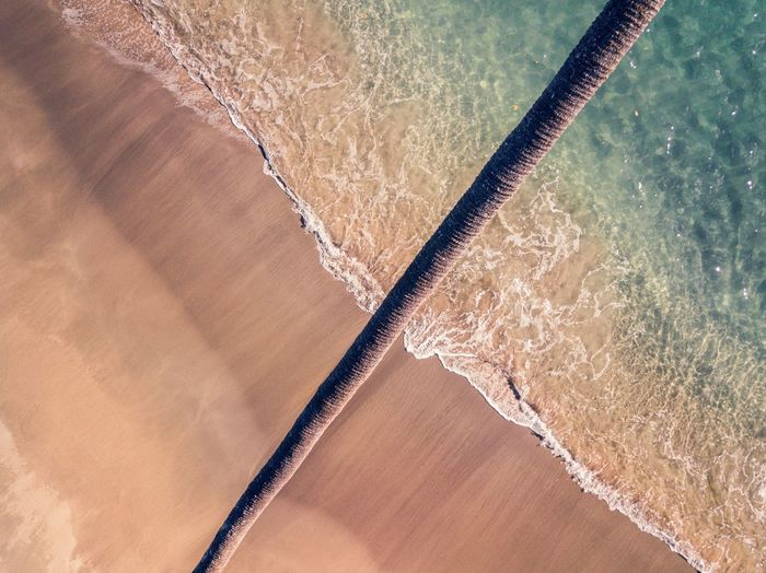 High angle view of palm tree at beach