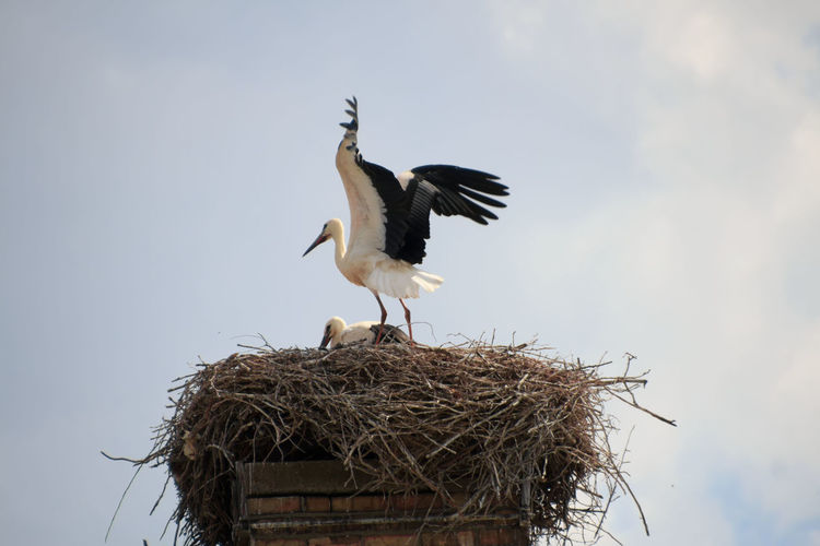 Low angle view of birds in nest against sky