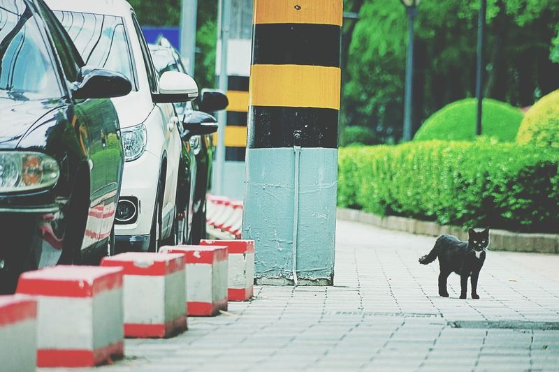 Portrait of cat on footpath by cars on street