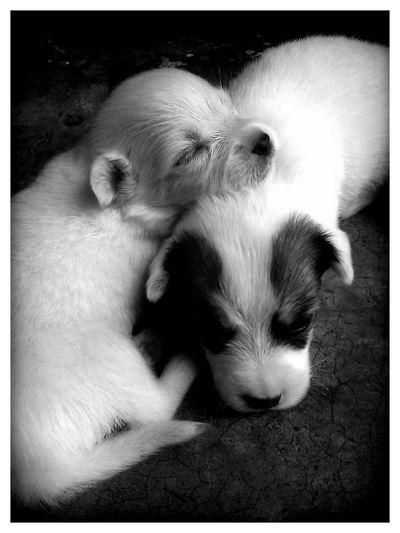 EyeEm Pets