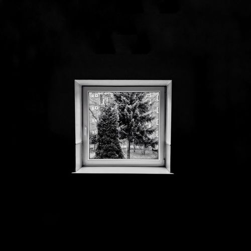 Trees in forest seen through window