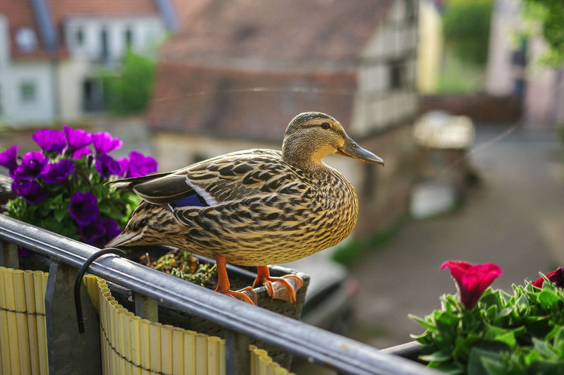 Close-up of bird perching on flower