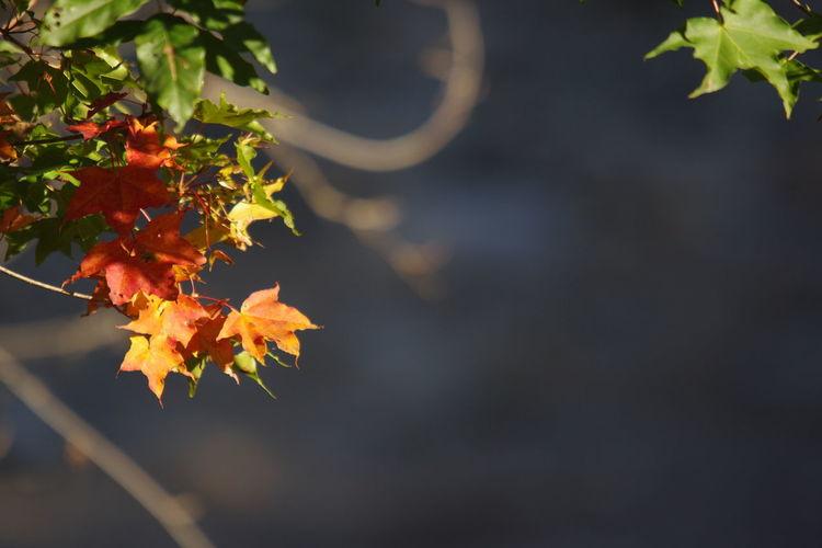 秋の風景 前沢ふるさと公園