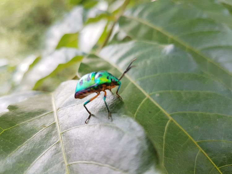 morning picture #Nature  #photography #insects #greenery First Eyeem Photo