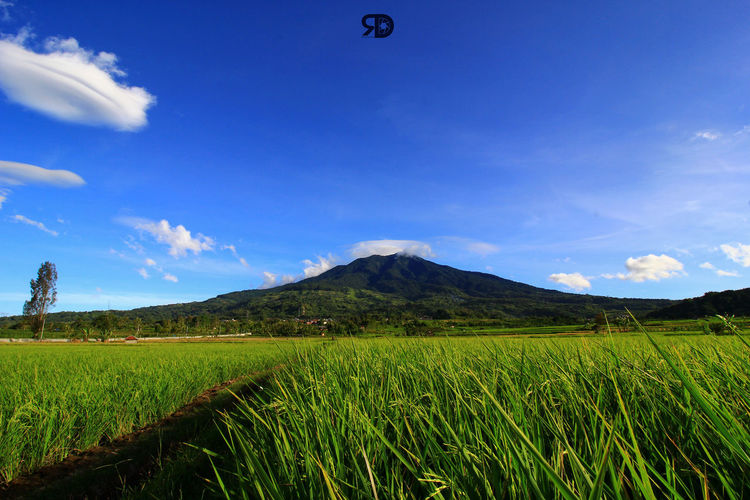 Green Color Nature Mountain Scenics Tranquility Landscape Outdoors Sky Blue Beauty In Nature Blue Sky Nature Photography Wonderful Place Wonderfulindonesia Pesonaindonesia_id