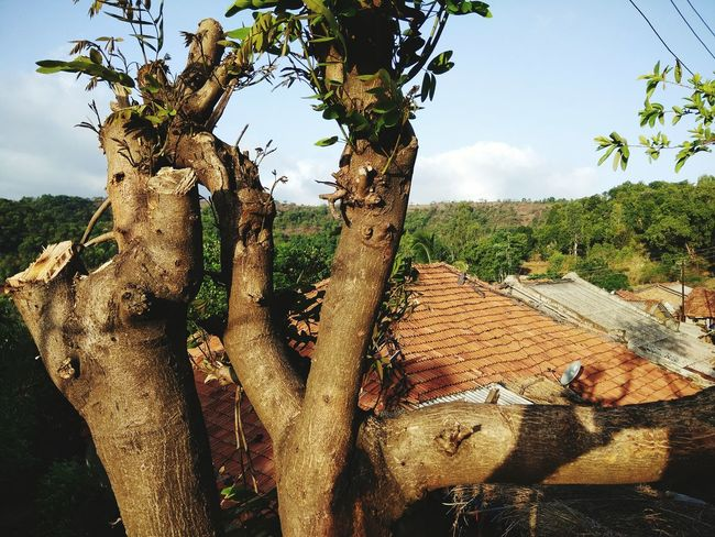 पुरुषवाडी भांडारधारा , लहान पण सुंदर गाव