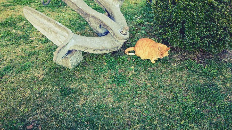 My Best Photo 2015 Xperia Z4 Cat XPERIA Cute Cats Cute Animals Anchor ねこ Stray Cat The Street Photographer - 2016 EyeEm Awards Nature's Diversities Cats Cat♡ Hidden Gems