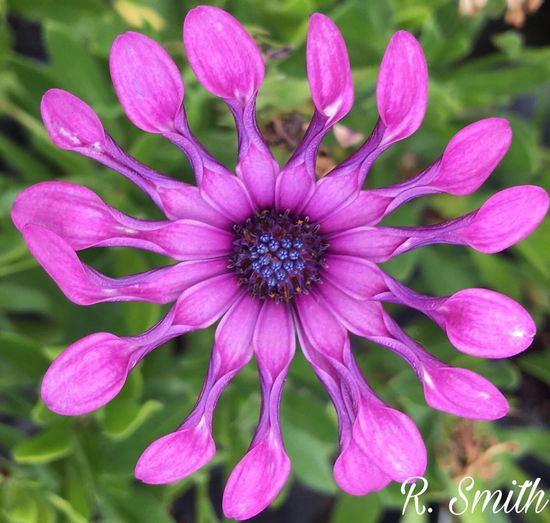 Funnylooking Flower Purple