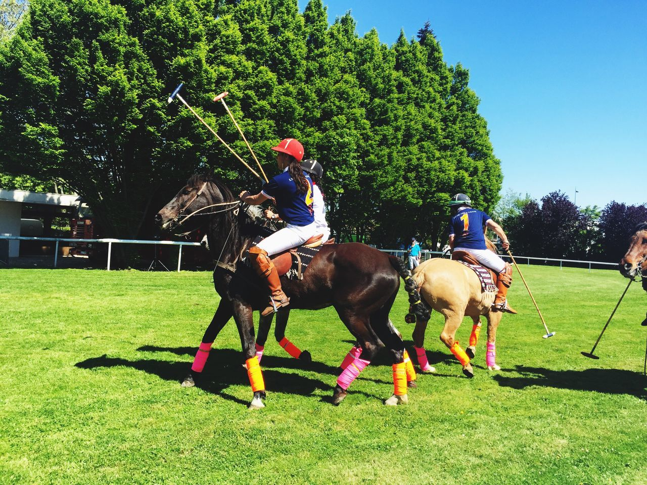 horse, domestic animals, real people, horseback riding, tree, mammal, competition, grass, sport, jockey, sports helmet, field, competitive sport, headwear, day, men, horse racing, helmet, riding, protection, outdoors, growth, leisure activity, skill, referee, sports track, nature, adult, people