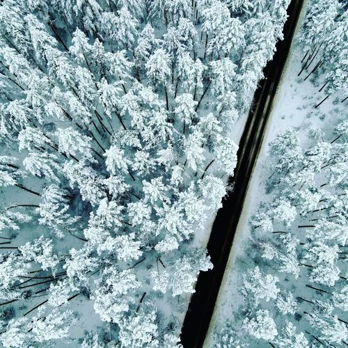 High angle view of frozen flowering plants during winter