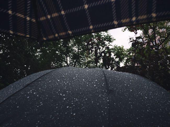 Umbrella Raindrops Rainy Days Togetherness