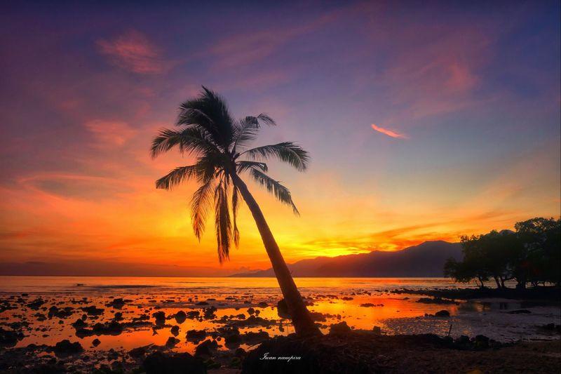 sunrise palibo beach Palm Tree Sunset Tree Sea Silhouette No People
