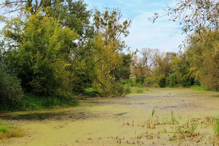 Pond Standing Water Pond Leaves No People Wild Plant Outdoors Autumn Nature Photography Green Nature Tree Water Sky