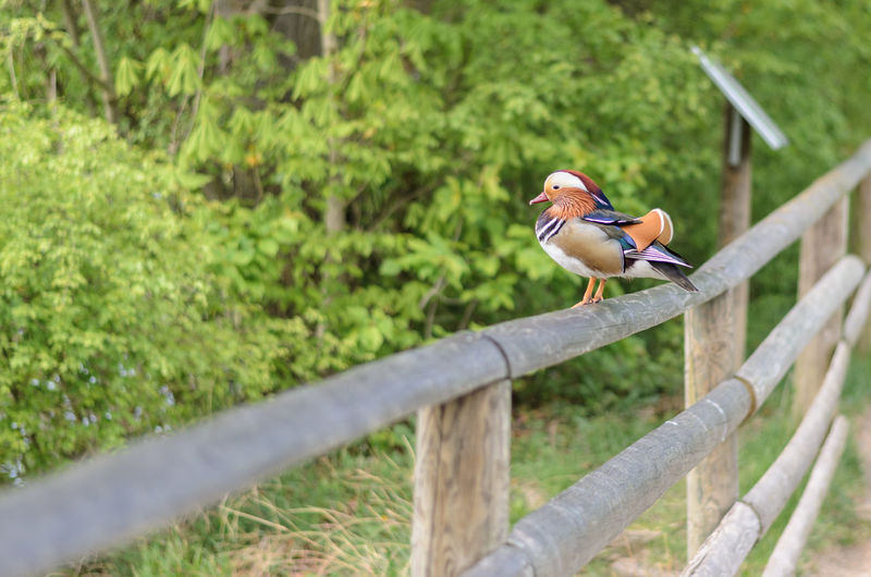 Bird Perching On Fence