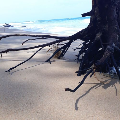 Sea and Root Root Wood Water Sea Beach Sand Wave Shadow Sand Dune Blue Sky Horizon Over Water