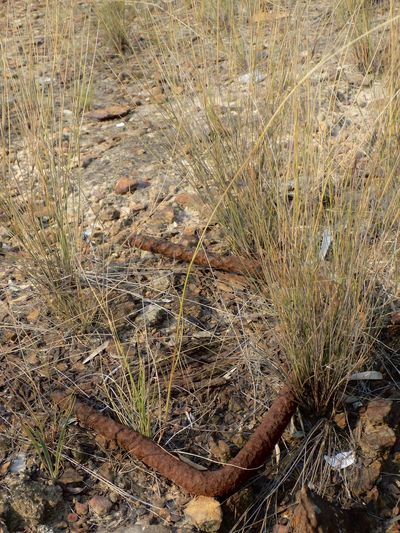 High angle view of plant on land