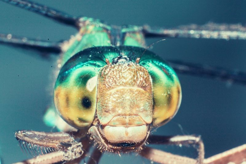 Macro Macro Beauty Macro Insects Dragonfly Nature Insect Insect Collection Close-up Animal