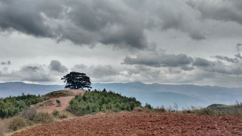 Landscape HDR Montains    365 Project Of Virgolcj 行色摄影 PhonePhotography Travelling Nature Tree
