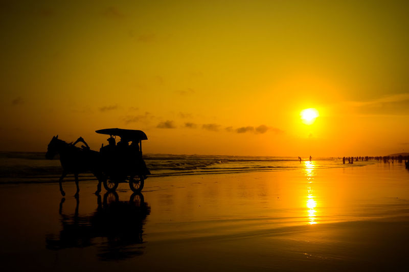 siluet sunset Horse Siluet Shadow Black Water Sunset Sea Beach Silhouette Reflection Sky Calm Scenics