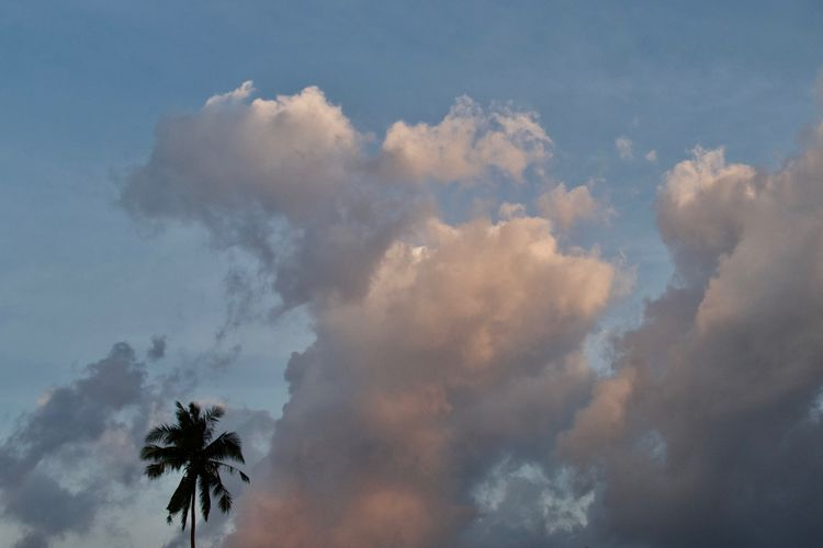 Cloud - Sky Sky Beauty In Nature Low Angle View Scenics - Nature Tranquility No People Tranquil Scene Day Nature Non-urban Scene Idyllic Copy Space Tree Full Frame Heaven Backgrounds Meteorology Outdoors Palm Tree Moody Sky Sky Scape Cloudscape Thailand Tropical Climate