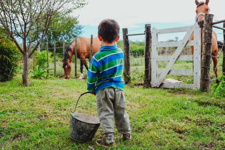Rear view of boy holding bucket while standing on grass with horses in ranch