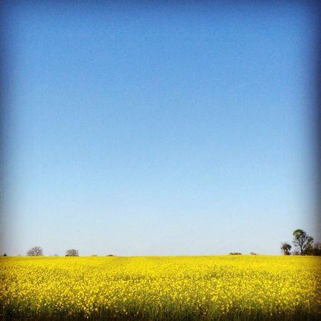 Sunny Sunday ☀️ Sun Fleurs Sunny Day Sunnyday Sunnyday☀️ Beautiful Nature Beautiful Day Blue Sky Nature Nature Photography Landscape Landscape_photography